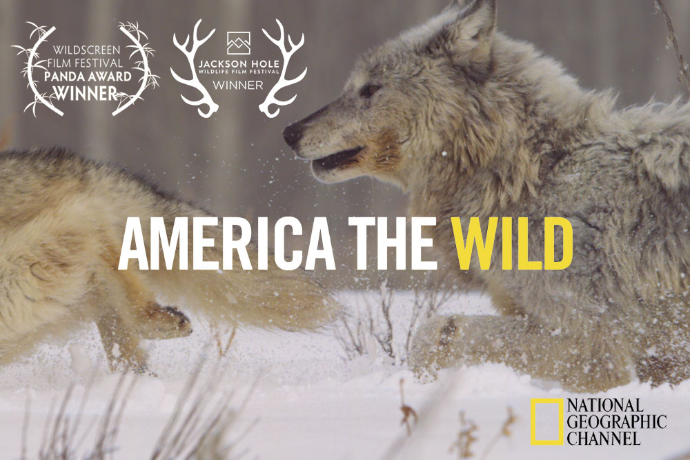 America the Wild on National Geographic Wild Channel